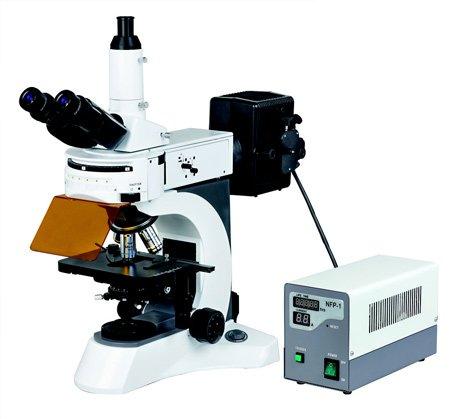 Mikroskop epifluorescencyjny MBL 800 TFL